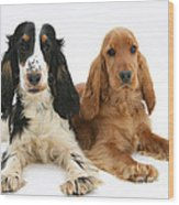 English Cocker Spaniels Wood Print