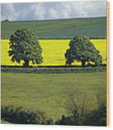 The Cotswolds 2 Wood Print