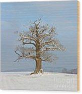 English Oak Wood Print