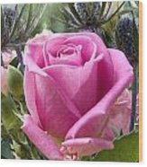 English Pink Rose Close Up Wood Print