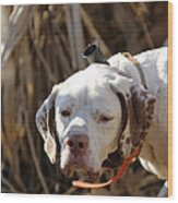 English Pointer On Point - D004001 Wood Print