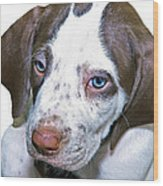 English Pointer Puppy Wood Print