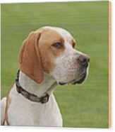English Pointer Wood Print