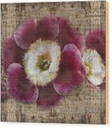 English Primrose  Wood Print by Barbara  White