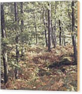 English Woods And Autumn Ferns Wood Print