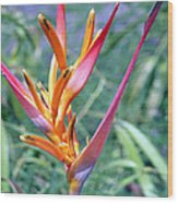 Enhanced Heliconia Wood Print by Karen Nicholson