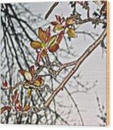 Entanglement IIi Wood Print by Rotaunja