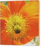 Enter The Orange Poppy Wood Print