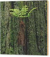 Epiphytic Fern Growing On Redwood Wood Print