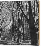 Epping Forest Wood Print