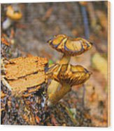 Epworth Mushrooms Wood Print