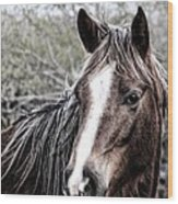 Equine Trance Wood Print