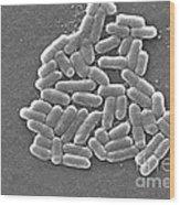 Escherichia Coli, Sem Wood Print by CDC/Science Source