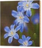 Etoiles Bleus Wood Print