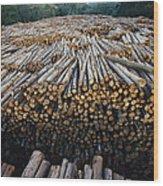 Eucalyptus Stacked Lumber Wood Print