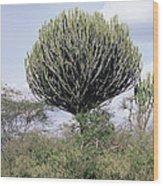Euphorbia Candelabrum Wood Print