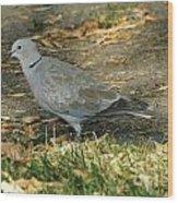 Eurasian Dove Wood Print