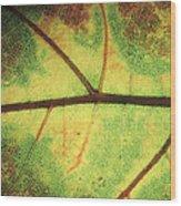 European Beech Fagus Sylvatica Detail Wood Print