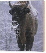 European Bison Bison Bonasus In Snow Wood Print