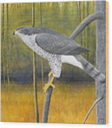 European Goshawk Wood Print