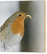European Robin Feeding On A Mealworm Wood Print by Duncan Shaw