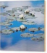 European White Waterlily Wood Print