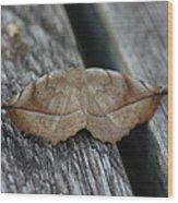 Eutrapela Clemataria Wood Print by Sean Green