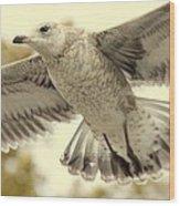 Evangeli-gull Wood Print by Ed Smith
