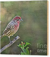 Evening Finch Blank Greeting Card Wood Print