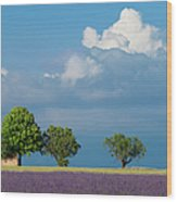 Evening In Provence Wood Print