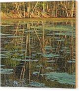 Evening Light On Missouri Pond 2 Wood Print