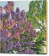 Evening Lilac Wood Print