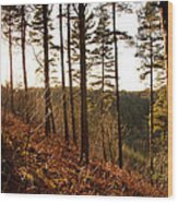 Evening Sun Rays Wood Print