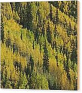 Evergreen And Quaking Aspen Trees Wood Print