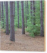 Evergreen Forest Wood Print
