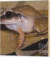 Evergreen Robber Frog Wood Print by Dante Fenolio