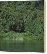 Everywhere And Nowhere - Holmdel Park Wood Print