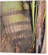 Evolution Of Roots Wood Print