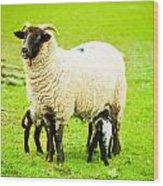 Ewe And Lambs Wood Print by Tom Gowanlock
