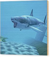 Example Of Reality Centre Graphics, Shark Wood Print
