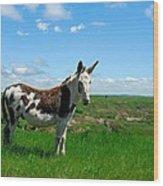 Exotic Mule In Montana Wood Print