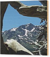 Exposed Roots Framing Mountains Wood Print