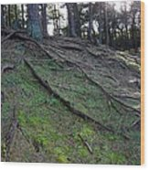 Exposed Roots Wood Print