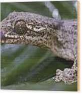 Extreme Close-up Of A Gecko In The Rain Wood Print