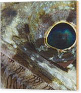 Extreme Close-up Of A Lizardfish Wood Print