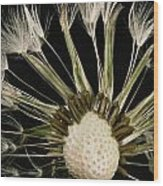 Extreme Close-up Of The Seedhead Wood Print