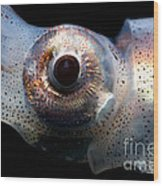 Eye Flash Squid Wood Print