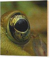 Eye Of Frog Wood Print