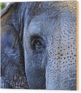 Eye Of The Elephant Wood Print