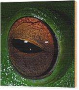 Eye Of The Frog Wood Print